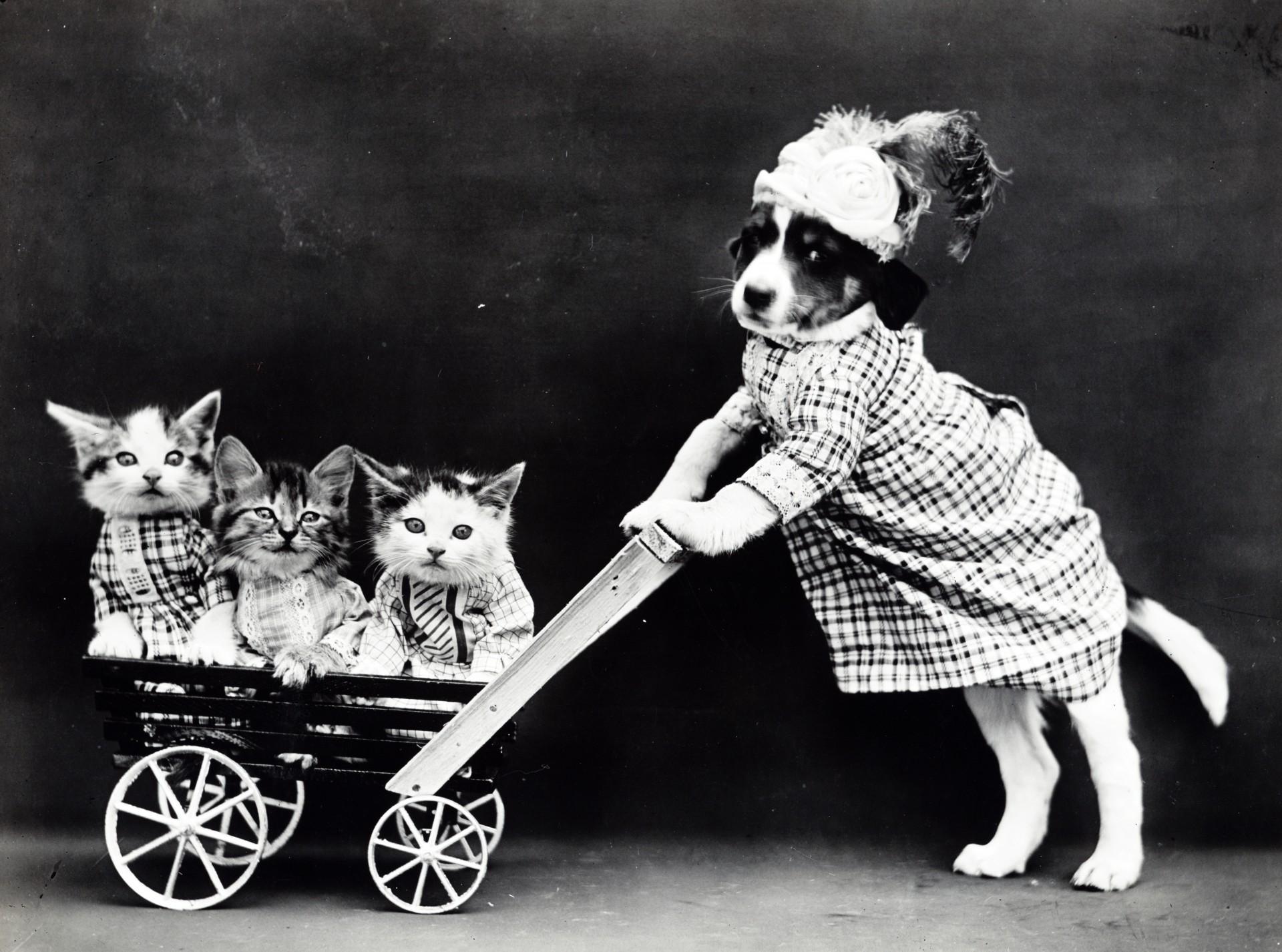 Chiens et chats vintage