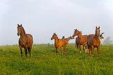 Ontario Horse Farm Insurance