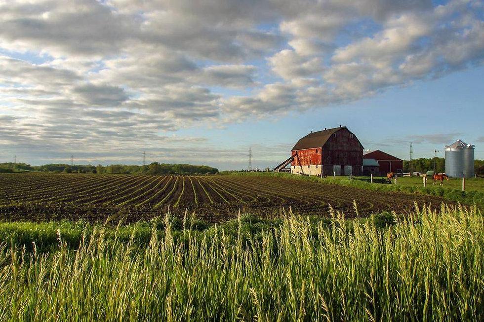 farm insurance milverton ontario.jpg