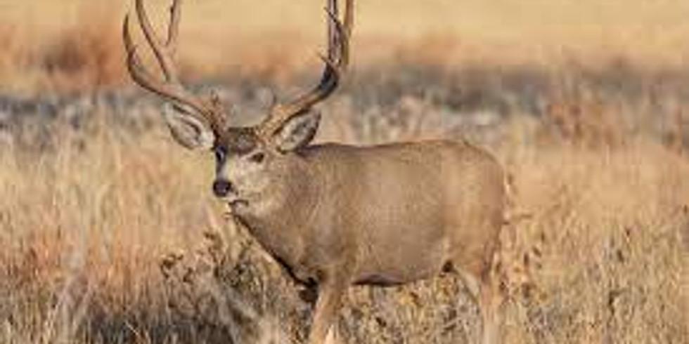 Mule Deer Hunt in Colorado Unit's 77, 78 & 771