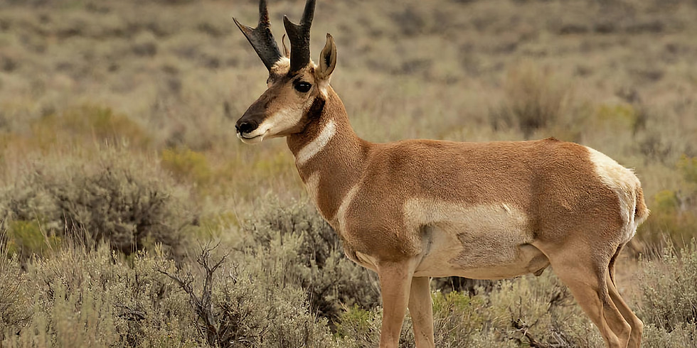 Trophy Antelope and Buck Mule Deer Hunts for one Hunter with Santa Fe Guide Service