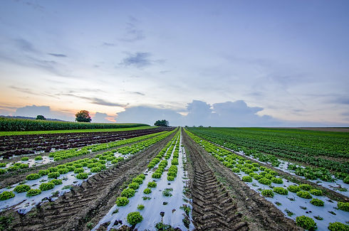 agriculture-.jpeg