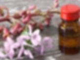 fleurs-bach_exact540x405_l.jpg