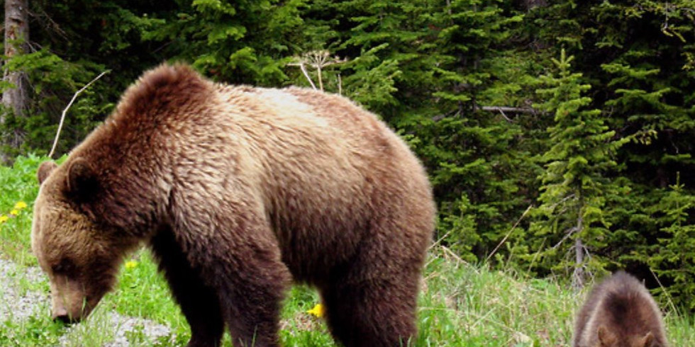Grizzly Bear Subcommittee Meeting