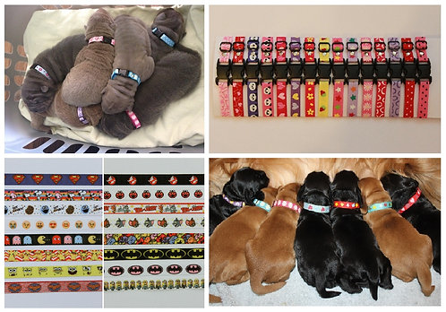 One puppy id collar, various designs