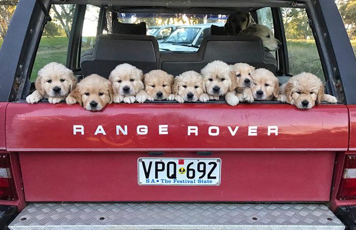 Seppelt-Puppies.jpg