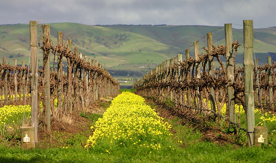 Mclaren-Vale-Vineyard-View.jpg
