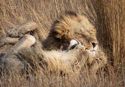 Okavango's brothers