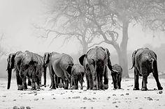 elefanti nella nebbia.jpg