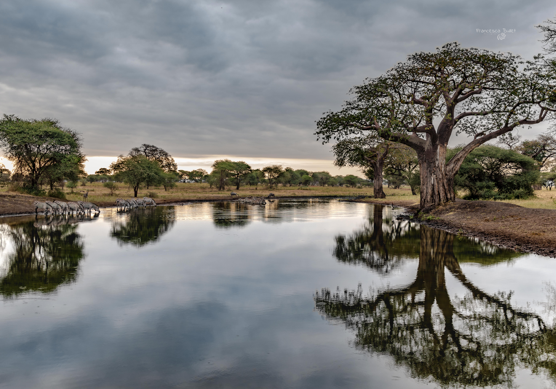 Tarangire Park