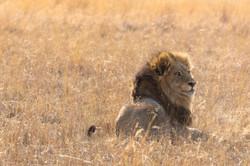 The King of Okavango Delta