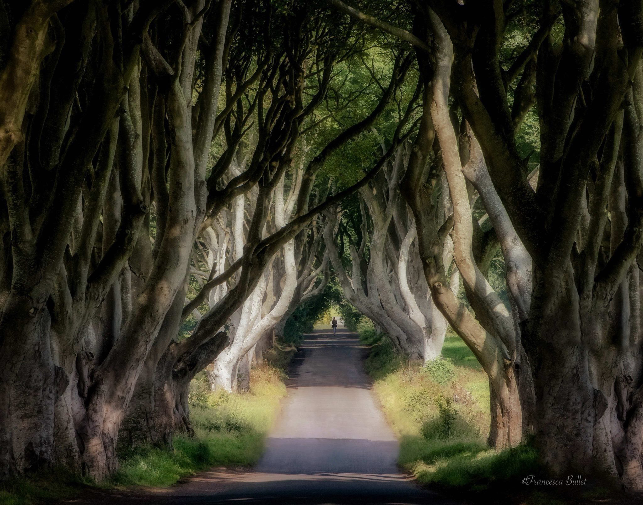 Ireland, Dark Hedges