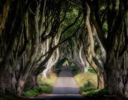 Ireland, Dark Hedges