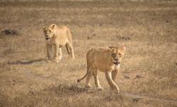 Ngoro Ngoro National Park