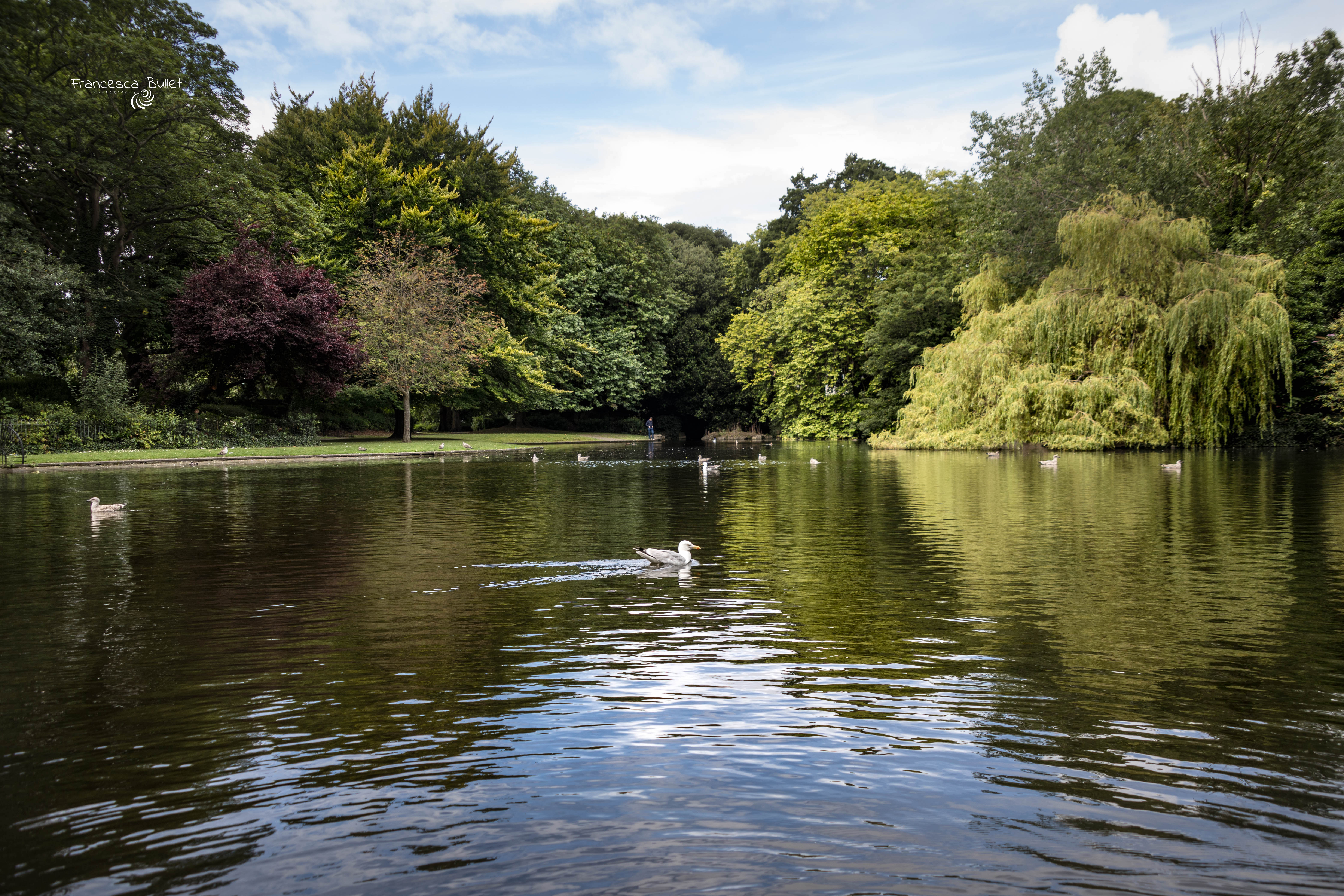 Ireland, St Stephen's Green