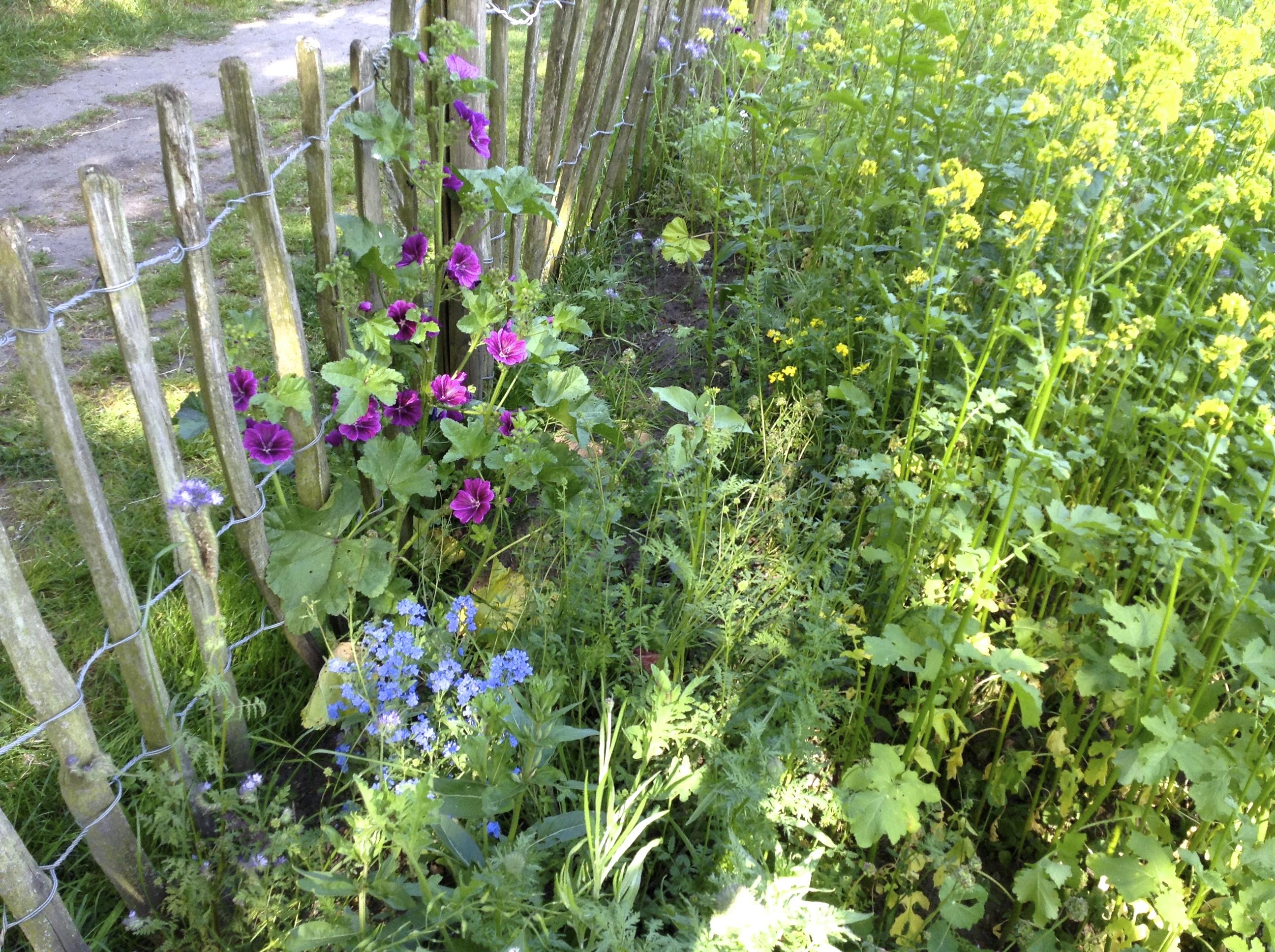 Bloemen - diverse bijenbloemen