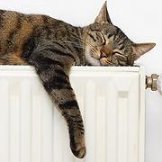 cat heater.jpg