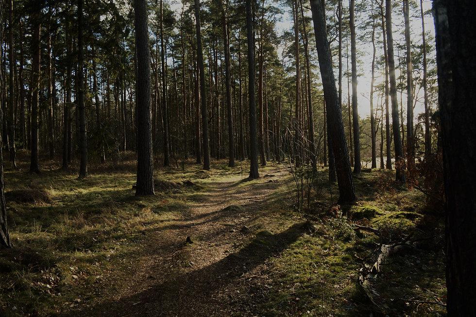 skog 1.jpg