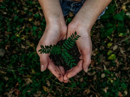 ¿Cómo reducir la huella de carbono de tu empresa? Sigue estos 10 consejos.