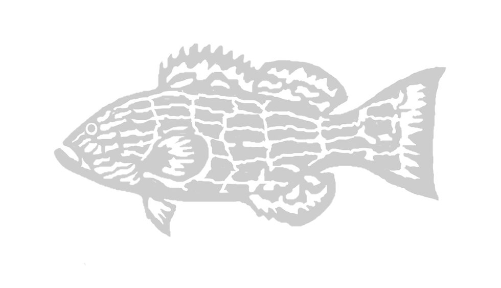 gray grouper 2.JPG