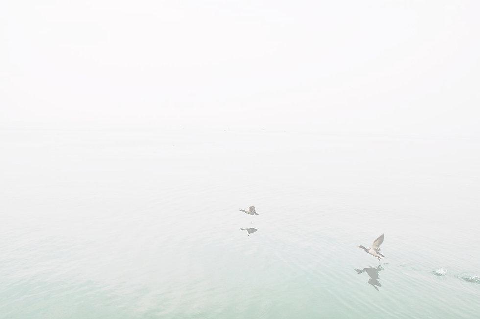 Ducks%20Over%20the%20Lake_edited.jpg
