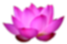 lotus_flower_PNG16.png