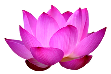 lotus_flower_PNG16.png