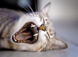 Stretch & Pandiculate (like a cat or dog!)
