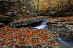 Beaver Creek2216