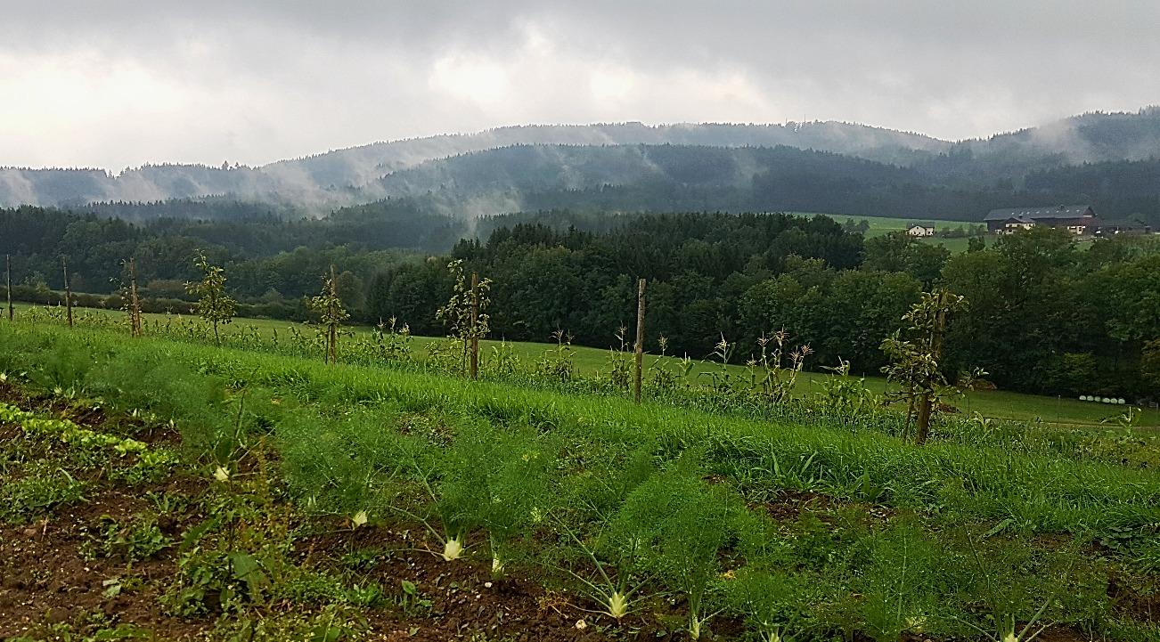 Herbststimmung am Tannberg