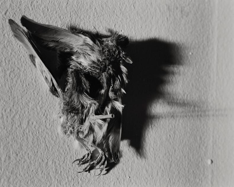 04_082_3_bird_shadow_16x20_7900MSR.jpg