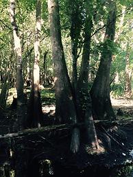 Captain John Tarr Fshing Charters|TailhuntrOutdoor Adventures|Florida|Ecotours