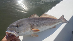Captain John Tarr|Redfish Charter