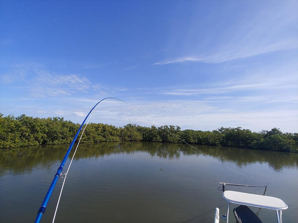 Captain John Tarr|Fly Fishing|Fishing Guide|Fishing Charter