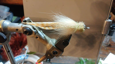 Spartina Turner redfish , seatrout fly