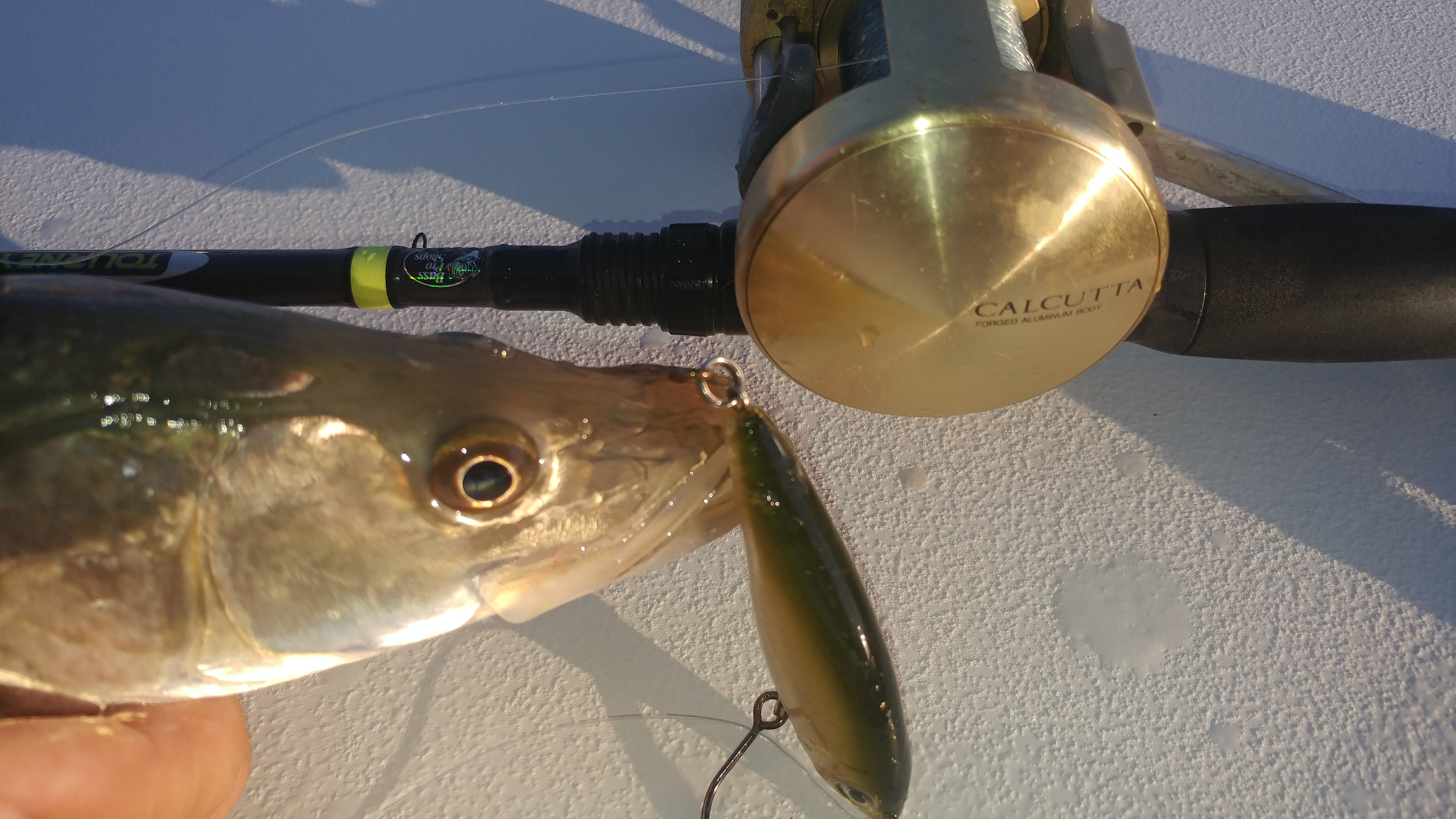 Captain John Tarr|Florida Snook