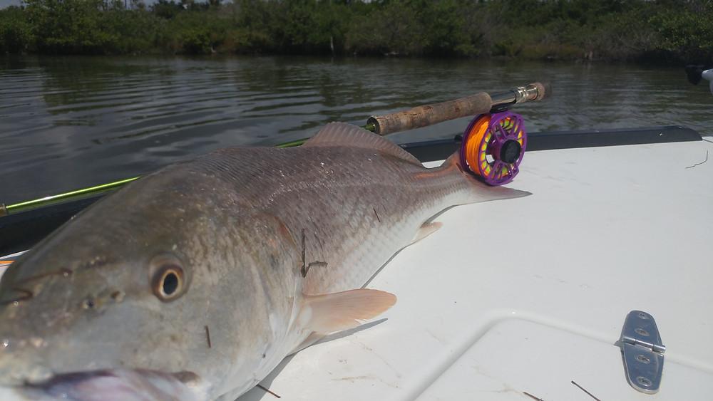 Captain John Tarr|Tailhunter Outdoor Adventures|Redfish on Fly