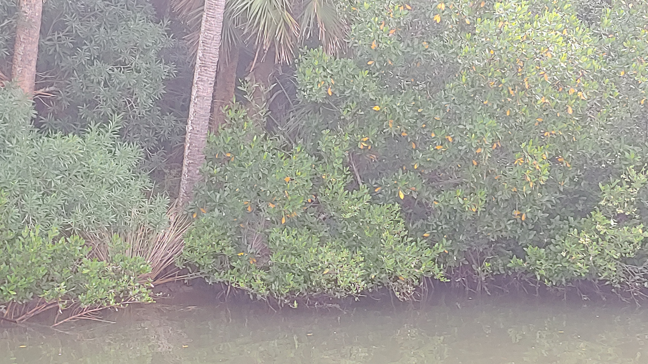 Mangrove Magic