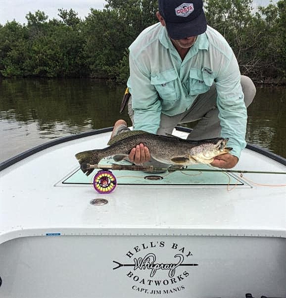 Gator Seatrout on Fly