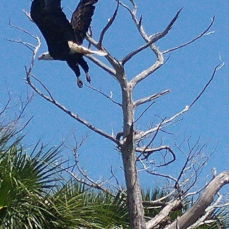 Captain John Tarr|Bald Eagle Flight
