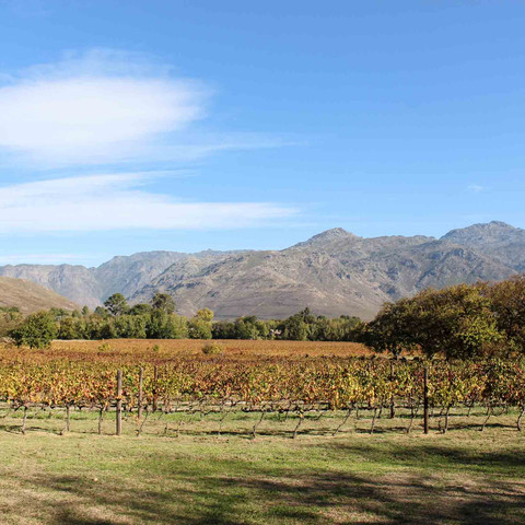 Take me back to The Franschhoek Wine Tram