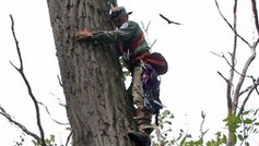 Bald Eagle Banding at Montezuma National Wildlife Refuge