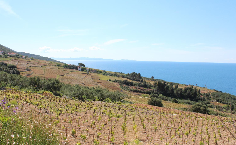 Pelješac vinska regija