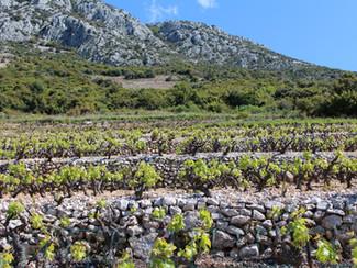 Peljesac wineries