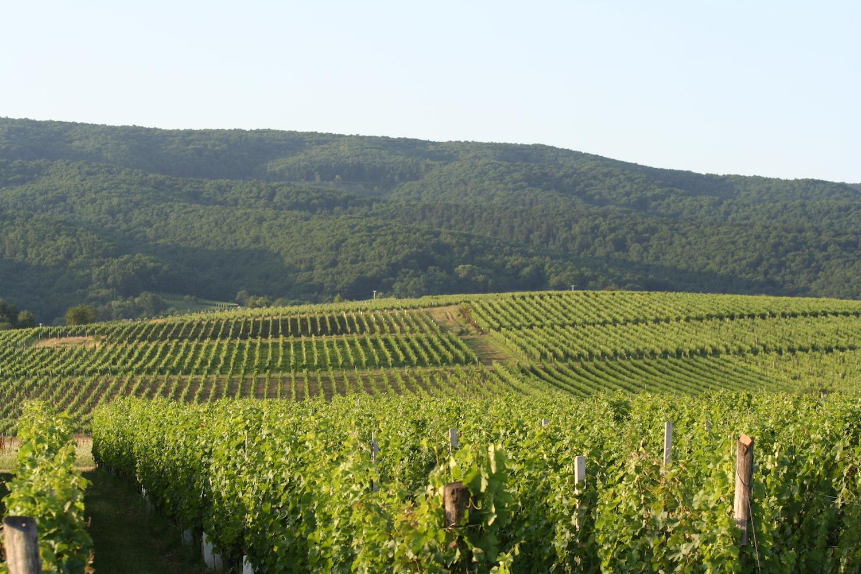 Peljesac wine area