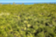 tropical-palm-tree-jungle-sian-kaan-tulu
