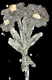 daisies2.png