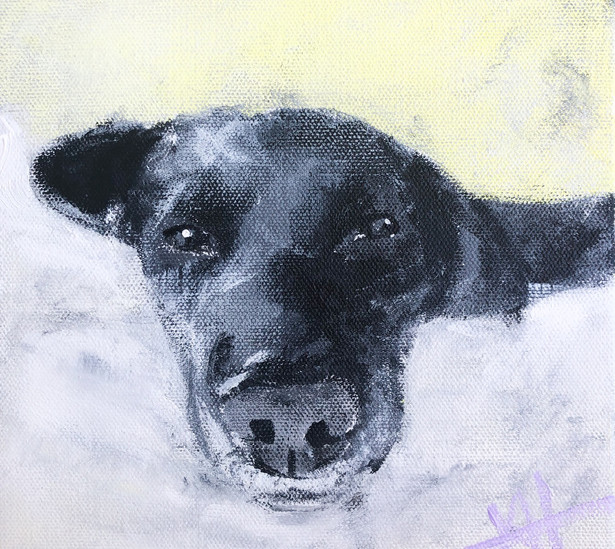 "12x12 acrylic on canvas ""Atticus"" Impressionism dog"