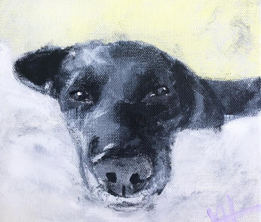 """12x12 acrylic on canvas """"Atticus"""" Impressionism dog"""