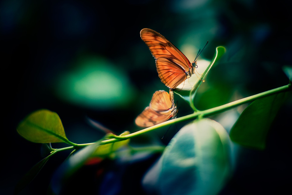 "a butterfly on a plant - I want my son to experience life - ""The Guiding Voice"""